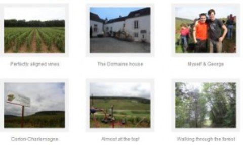 An Irishman's Wine Harvest – Patrick Farrell (2011)